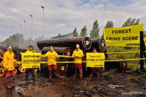 Czech Activists Uncover Illegal Logs from DRC